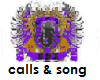 SPC Calls and Song