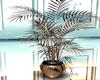 saloon 3 plant