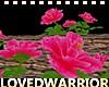 LW_ Pink Roses Garden