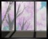 sakura window