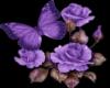 Flowers - Animated