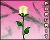 (*Par*) Yellow Rose