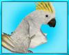 White Tropical Bird