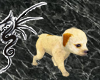 [LD]Puppy w/treat Cream