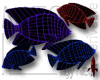 Angelfish MESH