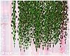 ♔ Furn e Liana Plant