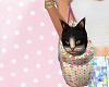 Dominik Cat in a Tote