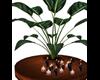 Sahara Gold Planter