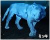 ! Tiger Shadow Protector