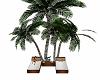 Beach Palm Loungers
