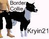 Border Collie (Rowdy)