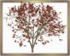 Japenese Maple Derive