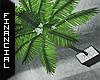 ϟ Indoor Palm