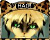 [M] Bengal * Hair V2