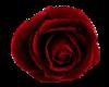 {Nami} Blood Rose