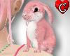CC Bunny pink Pet