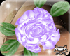 ! Aly purple rose