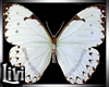 Nature Butterfly Anim