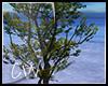 .:LaVie-Tree