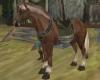 [RLA]Epona (Riding) Pet