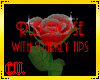 Red rose with silver tip