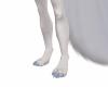 snowcat paw