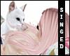 S  Sweet Kitty Cuddles