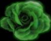 Green Large Rose