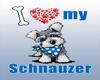 IvI Schnauzer Boy