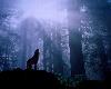 PAR Wolf Backdrop