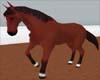 ~Bay Riding Horse (A)