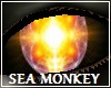 Sea Monkey Eyes