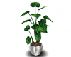 AwesomePlant