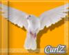 Pigeon Airborn 2019