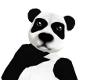 Panda Bear F
