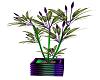 Joker Wild Plant V2