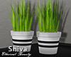 ❤ Table Plants