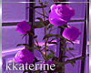 [kk] Where ? Roses Vase