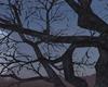 The Preacher Tree