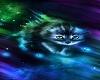 rave baby cat