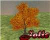 JF Fall Ficus Tree