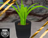 }T{ Potted Plant