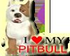 [BB] I LOVE PITBULL