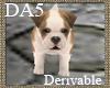 (A) Bull Dog Puppy