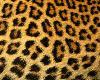 SS Leopard Glasses