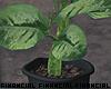 Tropical Indoor Plant