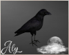 Hallow Moon Crow