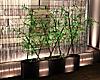 ~PS~ Club Omnia Plant2