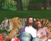 Couple Cuddle Tiger