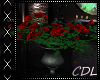 !C* I Red Roses